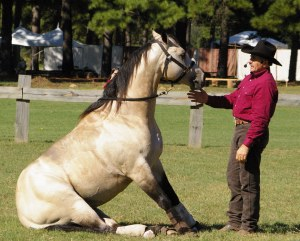Dr. Lew Sterrett's horse demonstrates the character of obedience