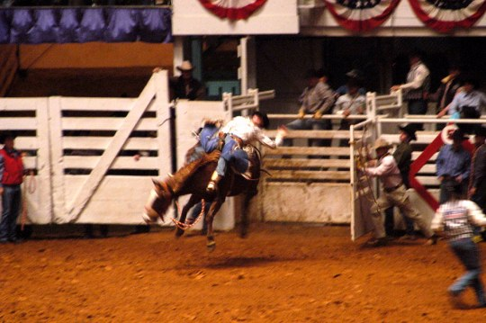 The new side-release bucking chutes were introduced in 1927... broncs are still puting all four hoves in the air in 2005